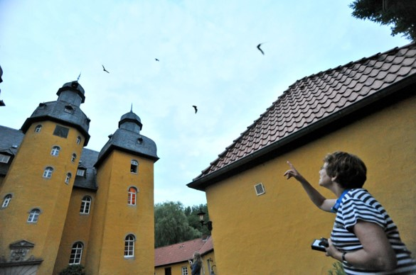 Artenschutz Fledermäuse